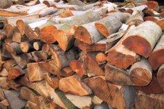 Buchenholz – Das Brennholz mit den besten Eigenschaften